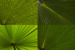 Palm leaf abstract set Royalty Free Stock Photography