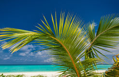Palm leaf agains blue sky with sea and tropical beach Royalty Free Stock Photography