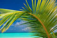 Palm leaf agains sky with sea and tropical beach Royalty Free Stock Photography