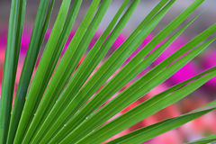 Palm leaf against blurry flowerbed Stock Photo