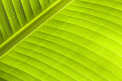 Palm leaf against the sun. Stock Image