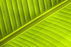 Palm leaf against the sun. Royalty Free Stock Images