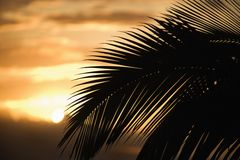 Palm leaf against sunset Royalty Free Stock Photo