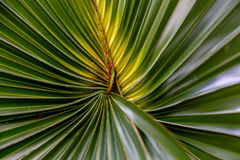 Palm leaf as a background Stock Photo