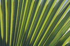 Palm leaf in back light Stock Images