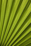 Palm leaf in back light Stock Photo