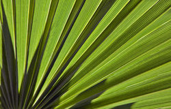 Palm leaf in back light Royalty Free Stock Photography