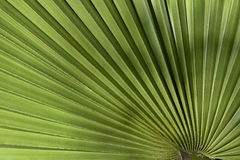 Palm leaf in back light Royalty Free Stock Images