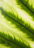 Palm leaf in back light Stock Photos