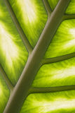 Palm leaf in back light Royalty Free Stock Photo