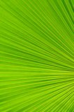 Palm leaf background Stock Image
