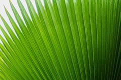 Palm leaf background Stock Photos