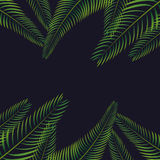 palm leaf background design Stock Photo