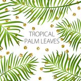 Palm leaf  background. Green leaves on white background with gold glitter dots Royalty Free Stock Image