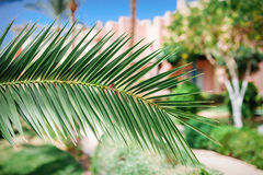 Palm leaf on the background of the hotel Stock Images