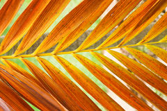Palm leaf. Royalty Free Stock Photo