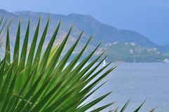 Palm leaf on a background of the sea and the hills Royalty Free Stock Images