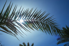 Palm leaf on a background of the suns rays Royalty Free Stock Photos