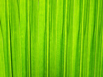 Palm leaf background Royalty Free Stock Images
