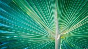 Palm leaf background Royalty Free Stock Image