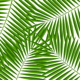 Palm Leaf  Background Vector Illustration Royalty Free Stock Images
