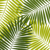 Palm Leaf  Background Vector Illustration Royalty Free Stock Photos