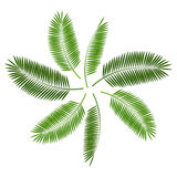 Palm Leaf  Background Vector Illustration Stock Photo
