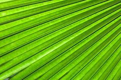 Palm leaf backlit with sunlight Stock Images