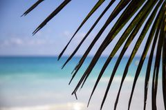 Palm leaf beach stock images