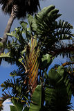 Palm leaf. Beautiful palms in the Caribbean Royalty Free Stock Images