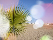 Tropical palm leaf on a beautiful sand beach as a blurred background. Palm leaf on a beautiful sand beach as a blurred background summer water tropical table royalty free stock photos