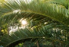 Palm leaf Stock Photos