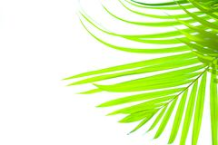 Palm leaf blowing in the sun Royalty Free Stock Image