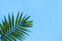 Palm leaf on a blue background. Top view royalty free stock photography