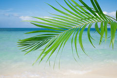 Palm leaf, blue sea and tropical white sand beach under the sun Royalty Free Stock Photos