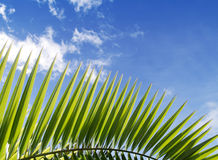Palm leaf and blue sky Stock Photo