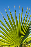 Palm leaf on blue sky Stock Photography