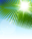 Palm leaf on blue sky and sun beams Royalty Free Stock Photo