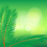 Palm leaf on bokeh Royalty Free Stock Images