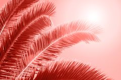 Palm leaf on bright background. Living Coral Color of the year 2019 royalty free stock photography