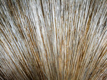 Palm leaf broom close up Stock Photo