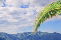 Palm leaf close with cloudy sky and mountain background Royalty Free Stock Images