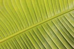 Palm leaf. Close up of palm leaf Stock Images