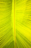 Palm leaf Stock Photography