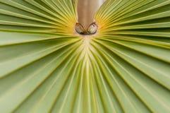 Palm Leaf. Close up of a fan like big leaf of a palm tree Stock Image