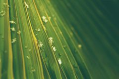 Palm leaf close up with snowflakes and water drops royalty free stock photography