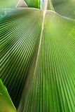 Palm leaf. Stock Photos