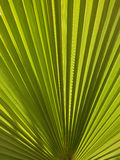 Palm leaf closeup. Close up photo of a palm leaf stock images