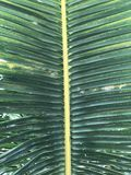 Palm leaf closeup background on sun royalty free stock photography