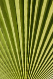 Palm Leaf. Closeup of tropical palm leaf with green leaves Stock Photo